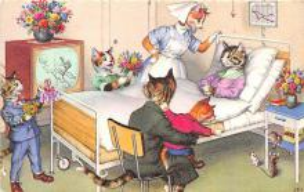 cat254427 - Cat Post Card Old Vintage Antique