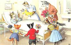 cat254469 - Cat Post Card Old Vintage Antique