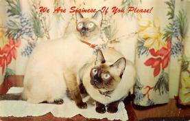 cat300157