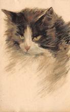 cat300243