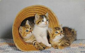 cat300245