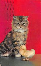 cat300267