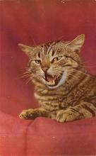 cat300285