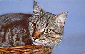 cat300295