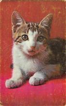 cat300325