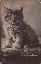 cat300339