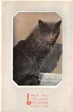 cat300349