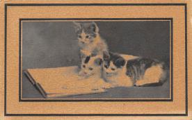 cat300351
