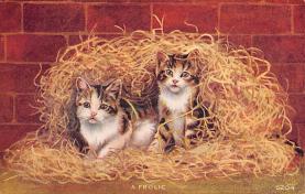 cat300385