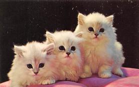 cat300401