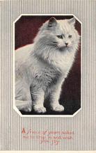 cat300403
