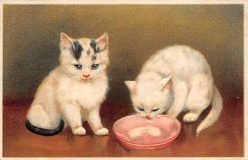 cat300417