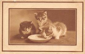 cat300435