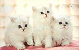 cat300487