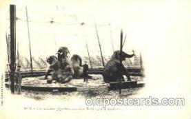 cir001012 - Barnum & Bailey circus Elephant postcard Post Card