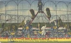 cir001025 - Sarasota, FL. USA, Ringling Bros.& Barnum & Bailey Circus Postcard Post Card