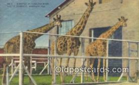 cir001040 - Ringling Bros & Barnum & Bailey Circus Circus Postcard Post Card Old Vintage Antique