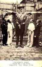 cir002053 - Cardiff Giant, 8ft, 4 in, weight 410 lbs, Circus Tallest Person, Giant, Postcard Post Card