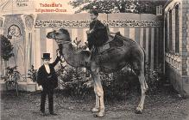 cir003271 - Circus Post Card, Old Vintage Antique Postcard