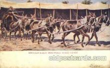 cir005184 - Dead wood stage coach Circus, Buffalo Bill's Wild West Postcard Post Card
