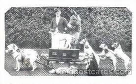 Watons Fox Terriers