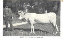 cir006067 - Jessie - The cow with the human skin postcard Post Card