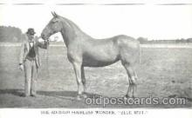 Hairless Wonder Horse