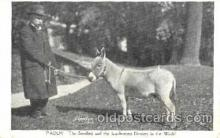 cir006077 - Paddy - the Smallest and the handsomest Donkey in the world postcard Post Card