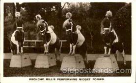 cir006078 - Broncho Bill's Performing Midget Ponies postcard Post Card