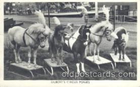 cir006139 - Circus Postcard Post Card Gilbert Circus Ponies