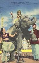cir006203 - Gainesville Community Circus Circus Postcard Post Card