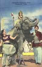 cir006206 - Gainesville Community Circus Circus Postcard Post Card