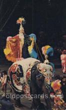cir006215 - Glamour Abounds Circus Postcard Post Card