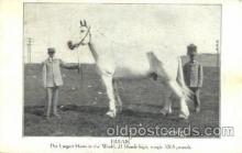 cir006235 - Hiram, Largest Horse 3065 Lbs Horse, Circus Oddities Postcard Post Card