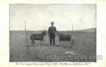 cir006236 - Smallest Horse Tom Thumb & Admiral Dot, Circus Oddities Postcard Post Card