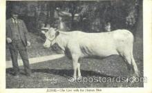 cir006237 - Jessie, Cow with Human Skin Circus Oddities Postcard Post Card