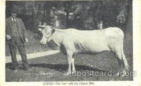 Jessie, Cow with Human Skin