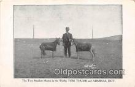 cir006264 - Circus Vintage Postcard