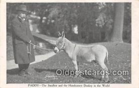 cir006268 - Circus Vintage Postcard
