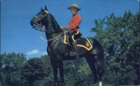 cmp001012 - Royal Canadian Mounted Police Old Vintage Antique Postcard Post Card