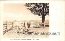 cow000012 - Paddock Steele Hill Farm, New Hampshire USA Postcard Post Card
