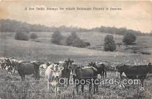 cow000017 - Delhi Jerseys Delaware County, USA Postcard Post Card