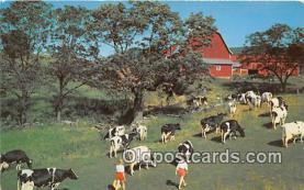 cow000023 - Oklahoma, USA Postcard Post Card