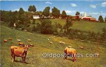 cow000028 - Cows Make Cheese Black River Falls, Wisconsin, USA Postcard Post Card