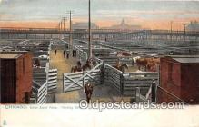 cow000036 - Union Stock Yards Chicago, IL, USA Postcard Post Card
