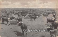 cow000040 - Feeders Ready to Ship El Centro, CA, USA Postcard Post Card