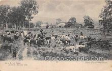 cow000050 - Dairy Farm Kerry Sydney Postcard Post Card