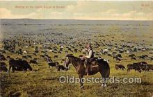 cow000058 - Grazing, Cattle Range  Postcard Post Card