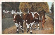 cow000060 - Ox Team Nova Scotia Postcard Post Card