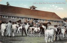 cow000062 - Cattle, Show Ring, Brockton Fair Brockton, Mass, USA Postcard Post Card
